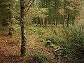 Woodland on Hopcott Common - geograph.org.uk - 1627822.jpg