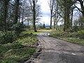 Woodland track at Gwysaney - geograph.org.uk - 736016.jpg
