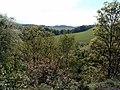 Woodland walk - geograph.org.uk - 12323.jpg