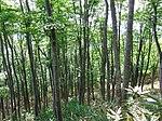Woods (9041187845).jpg