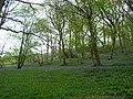 Woods near Melin y Wig - geograph.org.uk - 121492.jpg