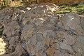 Yacimiento de La Pedraja en Mambrillas de Lara, huellas de dionosaurios, 02.jpg