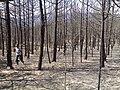 Yaylatepesi yangın - panoramio.jpg