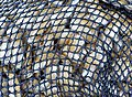 Zapallar -20171107 fRF20.2 machas.jpg