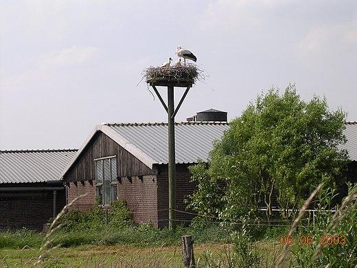Ooievaarsdorp in Zegveld