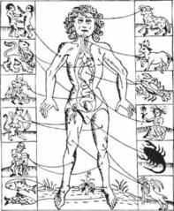 1702年の暦書に掲載された人体図