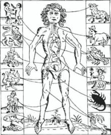 Man surrounded by signs of the zodiac, lines pointing to different body parts and organs