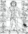 Zodiac man 1702.png