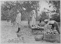 """Gathering the Fruits of an Oklahoma Farm-Apples, Peaches, Plums, Pears, Grapes, and Melons."" Children at their chores, - NARA - 516437.tif"