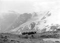 Österreichische Unterkunftshütte auf dem Stilfserjoch - CH-BAR - 3238754.tif