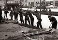 Člani Avto-moto društva Maribor-Center pri gradnji paviljona ob Partizanski cesti 1956.jpg