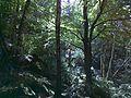 Ślęża - Skalna Perć - panoramio.jpg
