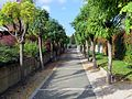 Žale, drevored akacij - panoramio.jpg