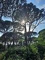 ΔΑΣΟΣ ΣΤΡΟΦΥΛΙΑΣ ΑΧΑΪΑΣ , ΝΑΤΟΥΡΑ 2000 - STROFYLIA FOREST , ACHAIA , NATURA 2000.jpg
