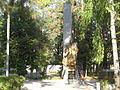 Братская могила № 9.JPG