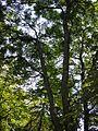 В тіні дерев.jpg