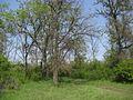 Дендрологічний парк 196.jpg