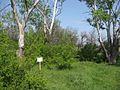 Дендрологічний парк 204.jpg