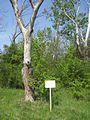 Дендрологічний парк 205.jpg