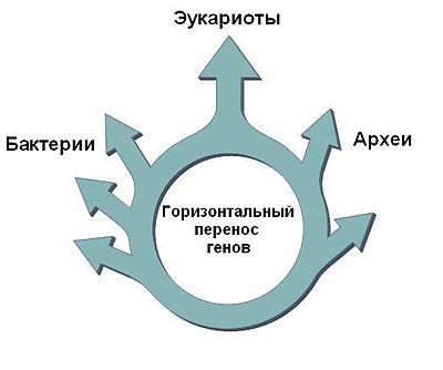 Схема, отражающая гипотезу «