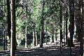Лесные тропы.jpg
