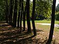 Липовая аллея - panoramio (1).jpg