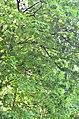 Парк Аскольдова могила у Києві. Фото 3.jpg
