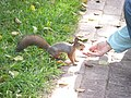 Парк Царицыно, белку кормят орехами, вид сбоку.JPG