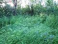 """Парк шума """"Гази Баба"""" 87.jpg"""