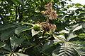 Растения в Седово 276.jpg