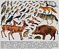 Тваринне населення байрачного лісу 2.jpg
