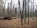Украина, Киев - Голосеевский лес 215.JPG