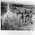 המאורעות בארץ ישראל 1938 - חומת טגארט Taggarts Wall גבול הצפון-PHL-1088100.png