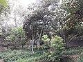 باغ کن۳.jpg