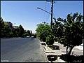 درخت به در خیابان آزادگان - panoramio.jpg