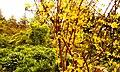 زرد - panoramio.jpg