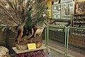 عمارت تیموری - موزه تاریخ طبیعی اصفهان (23) Natural History Museum of Isfahan.jpg