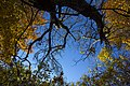 پاییزدر ایران-قاهان قم-Autumn in iran-qom 22.jpg