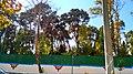 گنبد کاخ مرمر از پشت درختان و دیوار بلند آن در خیابان ولیعصر.jpg