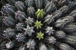 گونه های کاکتوس در گلخانه دنیای خار در قم 30.jpg