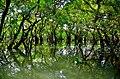 রাতারগুল বাগানের গাছ ও জলাভুমির ছবি 05.jpg