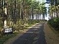 クマさんに出会った♪(Mr. bear road) - panoramio.jpg