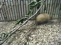 上野動物公園, Ueno Zoo(Ueno Zoological Gardens) - panoramio (40).jpg