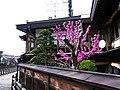尚古堂 Shoko-do - panoramio.jpg
