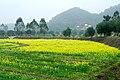 广州最美乡村—红山村 - panoramio (24).jpg