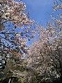 本善寺(honzenji)2010-3-30 - panoramio - ys1979 (3).jpg