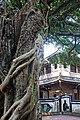 板橋林家花園-2.jpg