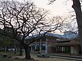 清大 Tsinghua University - panoramio (1).jpg