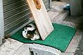 看板裏猫 (16811929281).jpg