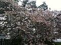香川県善通寺市善通寺 - panoramio (6).jpg